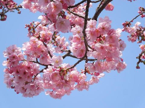 #499 春のセロトニン効果